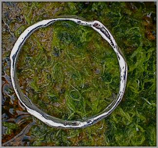 SterlingSilvercockringinrockpool